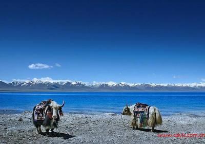 成都到拉萨、纳木措、日喀则、林芝单卧单飞十一日游、西藏旅游多少钱、成都到西藏旅游线路报价