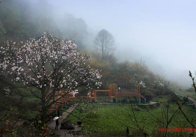 成都到药王谷、辛夷花汽车一日游、药王谷旅游多少钱、药王谷旅游线路报价