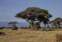 成都直飞肯尼亚一地十日游