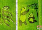"""成都一稻田现巨型""""大熊猫""""图案"""
