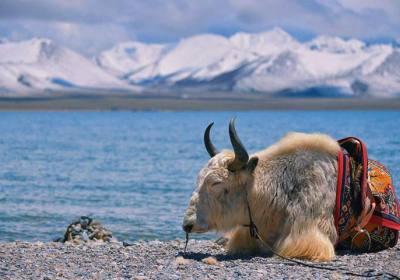 西藏旅游团多少钱、西藏旅游要多少天、西藏跟团游多少钱