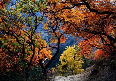 成都周边看红叶的地方、成都周边看红叶1-3日游、成都附近哪里看红叶的地方