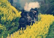 乐山嘉阳小火车一日游多少钱、犍为芭蕉沟一日游报团价格、嘉阳小火车跟团游攻略