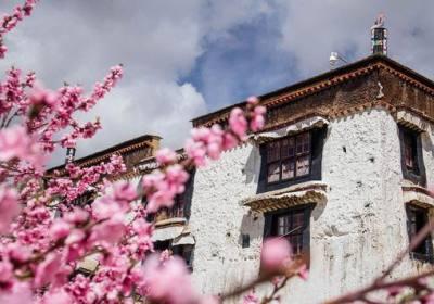 2021年林芝桃花节是什么时间、林芝桃花节在哪里举行、林芝桃花节在几月份