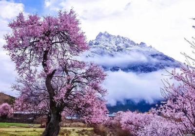 林芝海拔多少米、西藏林芝海拔高度是多少米