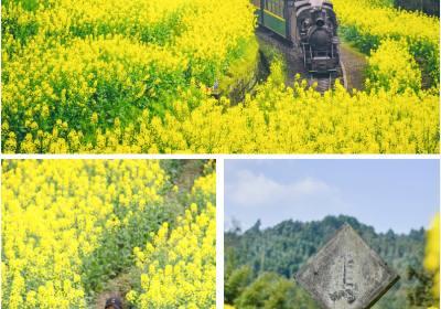 嘉阳小火车油菜花什么时候开、嘉阳小火车门票多少钱、成都嘉阳小火车一日游
