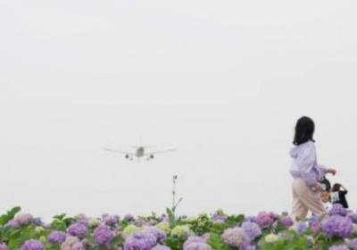 成都空港花田什么时候去最合适、成都空港花田要门票吗